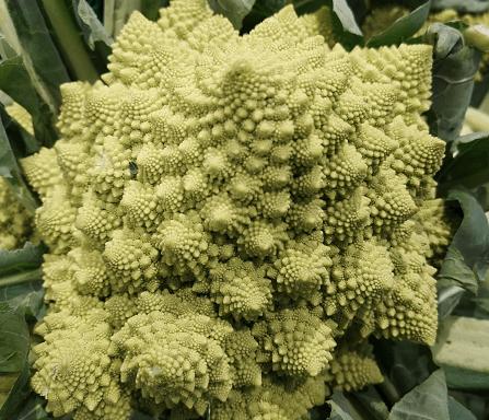 Broccolo-Romano-SezioneAurea